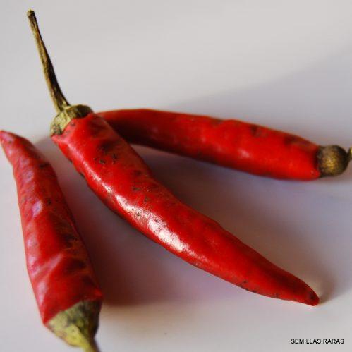 semillas de chiles jalapeños