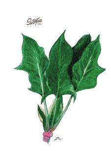 semillas de espinaca amadeo todo el año 4g