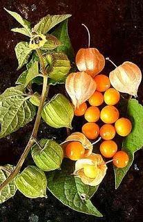 Resultado de imagen de Golden Berry