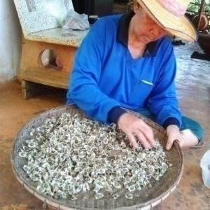 semillas de moringa, 100 semillas x 30 soles,importadas