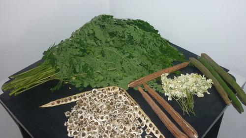semillas de moringa oleifera al mayor y detal (1 kilo $ 35 )