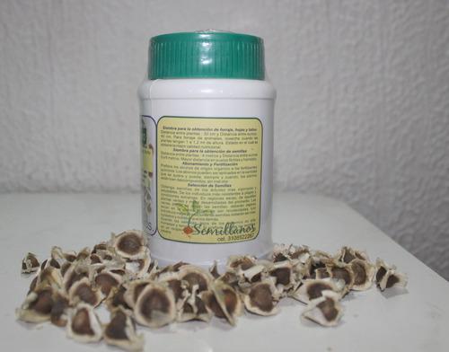 semillas de moringa. tarro por 150 unidades.