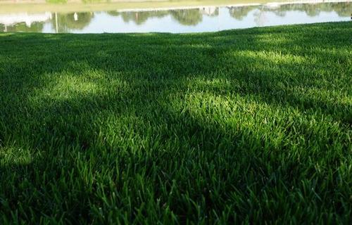 semillas de pasto de sombra importadas smart dense shade
