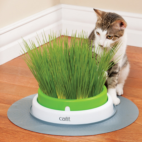 semillas de pasto para gatos c/vermiculita catit cat grass
