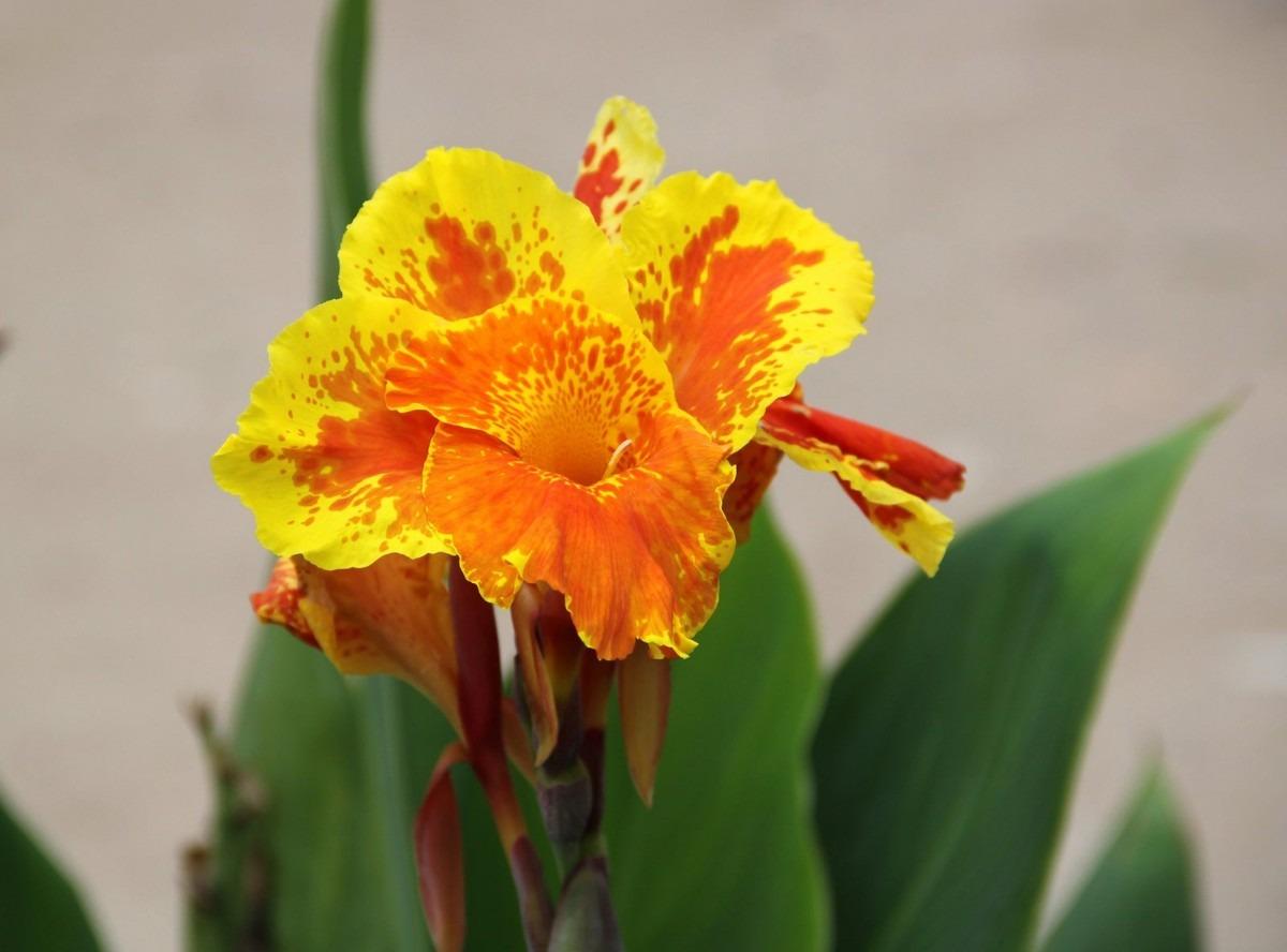 Semillas de plantas ornamentales u s 5 00 en mercado libre for Algunas plantas ornamentales