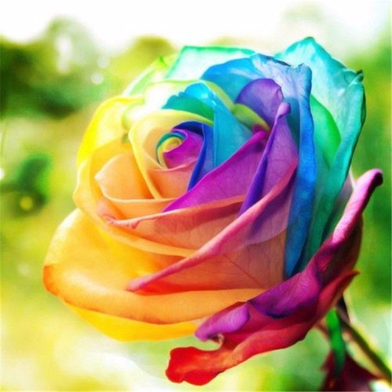 Semillas De Rosa Arco Iris Multicolor Rosa Exótica 18900 En