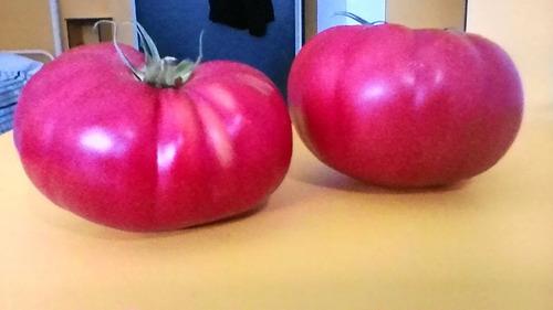 semillas de tomates rosa autentico sabor !!!!