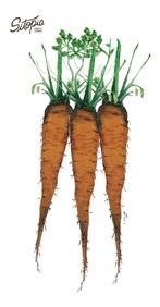 semillas de zanahoria criolla 6g