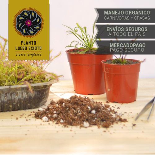 semillas droseras mix plantas carnívoras