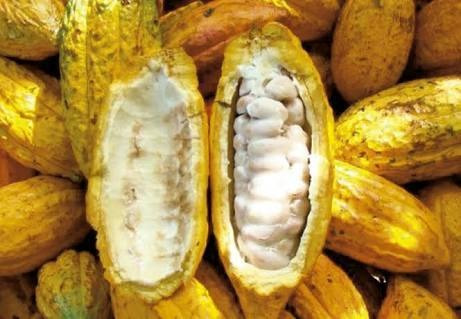 semillas frutales