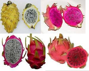 Resultado de imagen para fotos de muchas pitaya