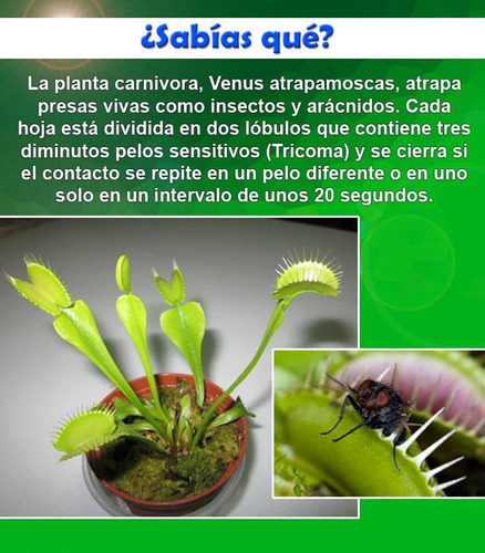 semillas plantas carnivoras venus atrapamoscas