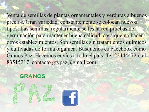 semillas plantas ornamentales y verduras