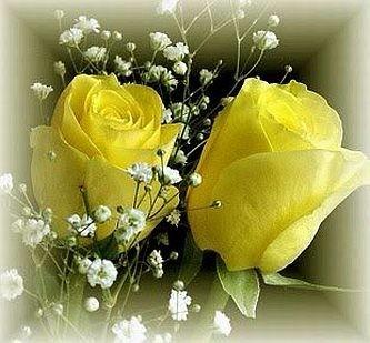 Semillas Rosa Amarilla Flor Rosas Amarillas Divinasx10 9000 En