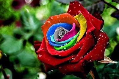 semillas rosas  colores organica+despacho  gratis