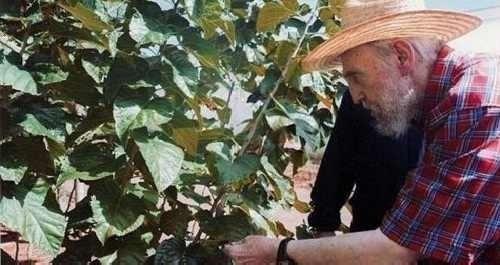 semillas seleccionadas de moringa oleifera + guia de cultivo
