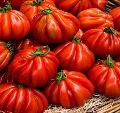 semillas tomate mexicano zapoteca gigante raras pack x 20