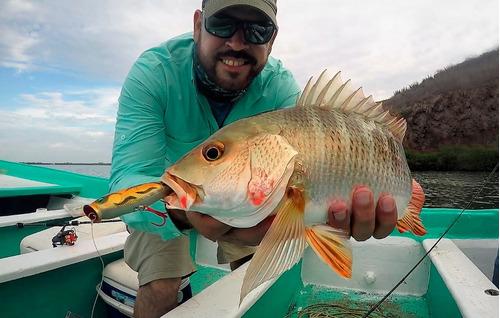 señuelo fisherking fk popper - 9 cm 1/2 oz