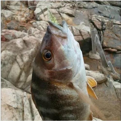 señuelos para pesca