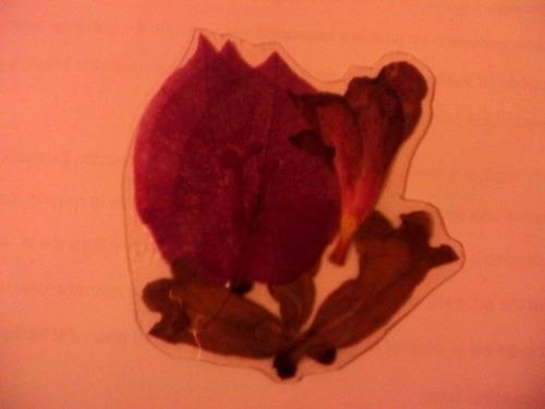 separadores de flores prensadas