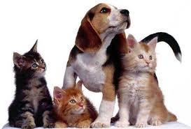 sepelio para mascotas   huellas por siempre