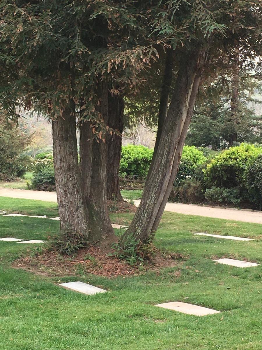 sepultura parque recuerdo cordillera, capacidad 7 personas