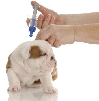 serv. veterinario a domicilio, certificado int. de salud