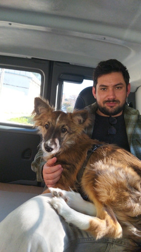 servet traslado de mascotas y veterinaria