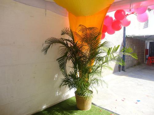 servicio de alquiler de: parabanes y palmeras decorativas