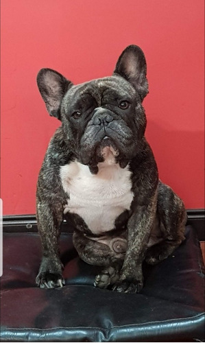 servicio de bulldog francés!!!!¿