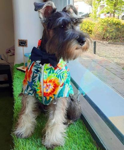 servicio de confección ropa para mascotas