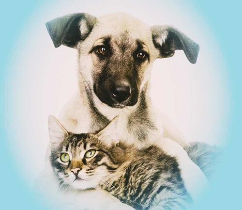 servicio de cremación de mascotas- eutanasia