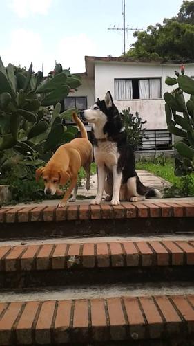 servicio de cuidado, guarderia y pension canina