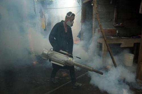 servicio de fumigacion chiripas cucarachas termitas zancudos