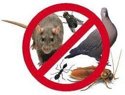 servicio de fumigacion en caracas contra ratas y ratones