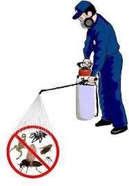 servicio de fumigacion para toda clase de plagas