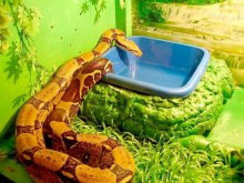 servicio de fumigaciones de culebras serpientes