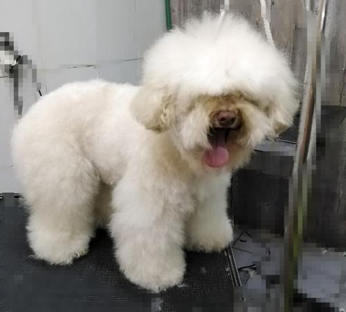 servicio de grooming profesional y comercial para perros
