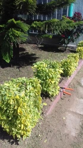 servicio de jardinería ixoye