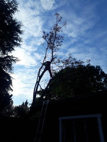 servicio de jardineria, paisajismo y podas