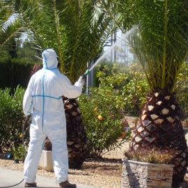 servicio de jardinería, poda y mantenimiento a domicilio