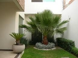 servicio de jardineria,poda,colocacion de cesped y limpieza.