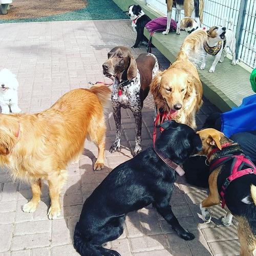 servicio de paseos caninos