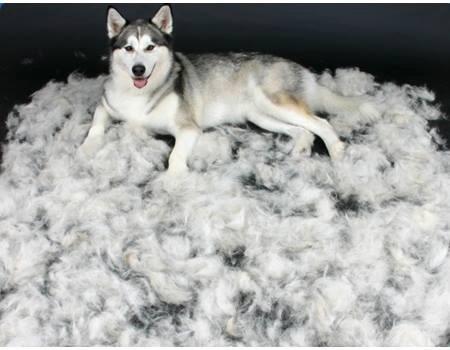 servicio de peluqueria canina a domicilio
