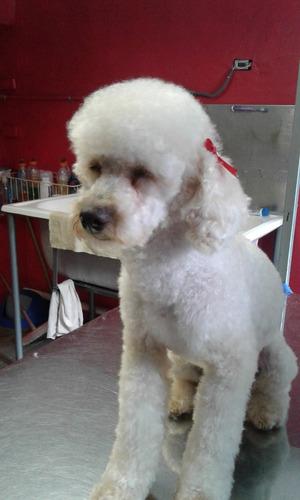 servicio de peluquería canina puerta a puerta
