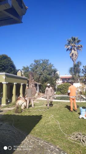 servicio de poda,extracciones de raiz, palmeras 11-3473-1591