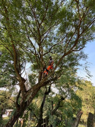 servicio de podas y tala de arboles, palmeras. zona sur