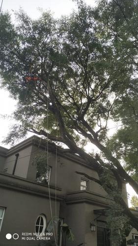 servicio de podas y tala de arboles zona norte, palmeras