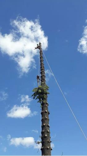 servicio de podas y tala de arboles zona norte,poda palmeras