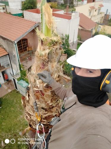 servicio de podas y tala de arboles zona oeste